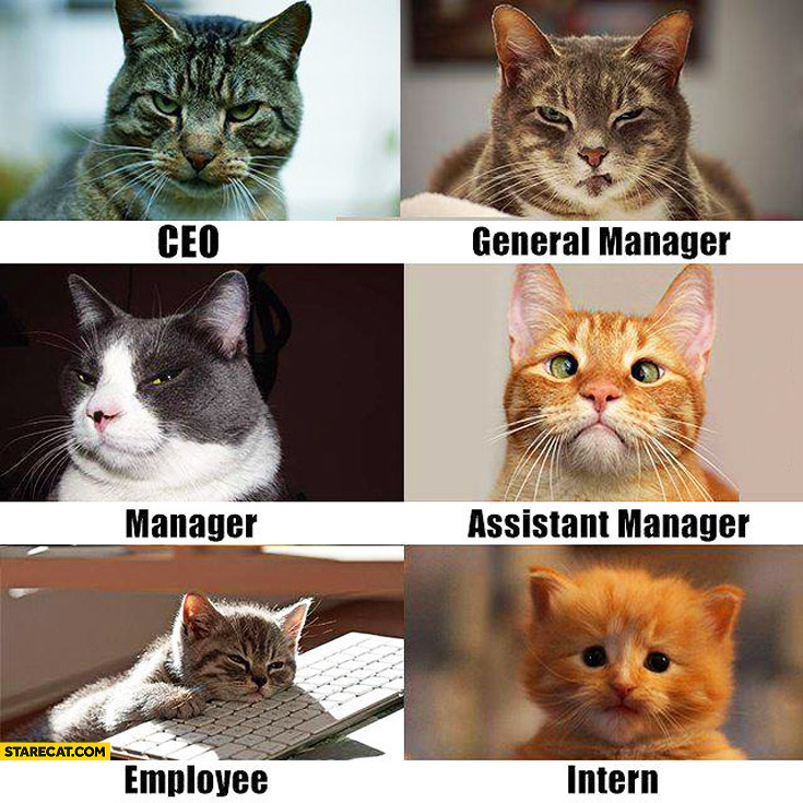 cats-in-a-company-ceo-general-manager-assistant-manager-employee-intern