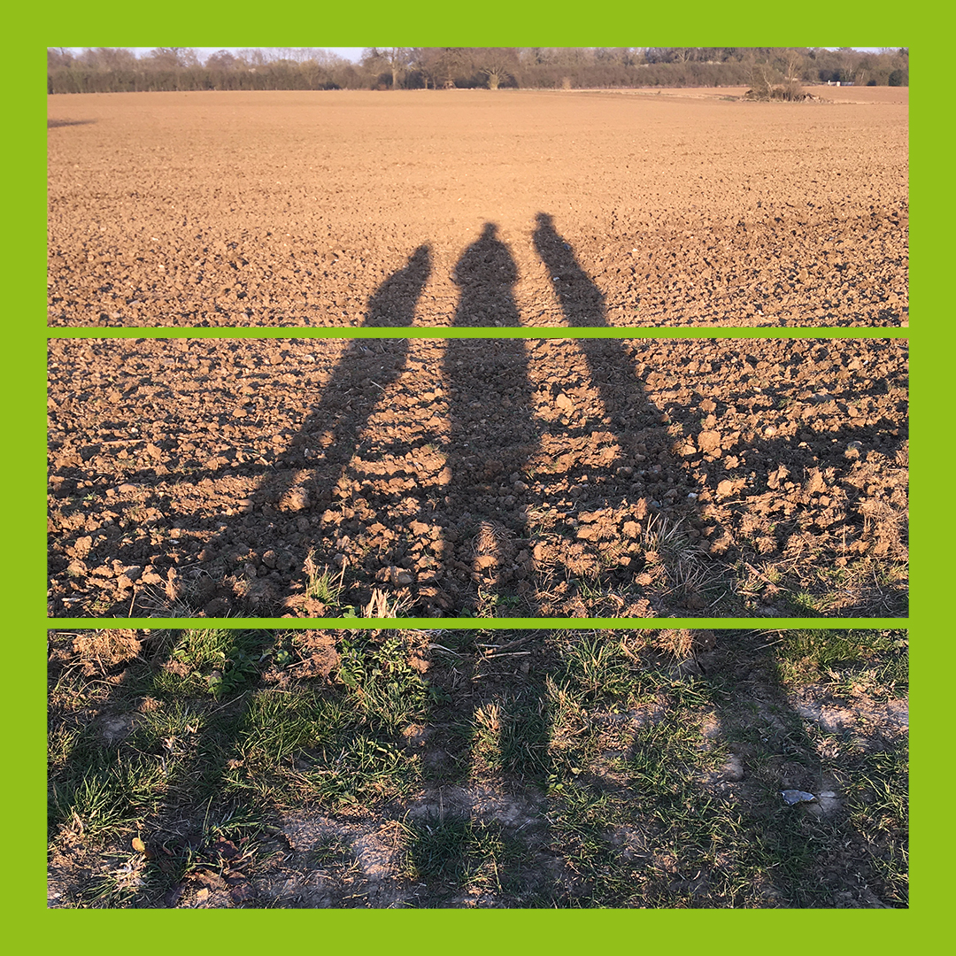 Shadows across a ploughed field